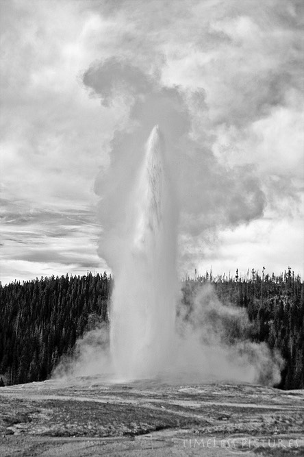 Old-Faithful-BW